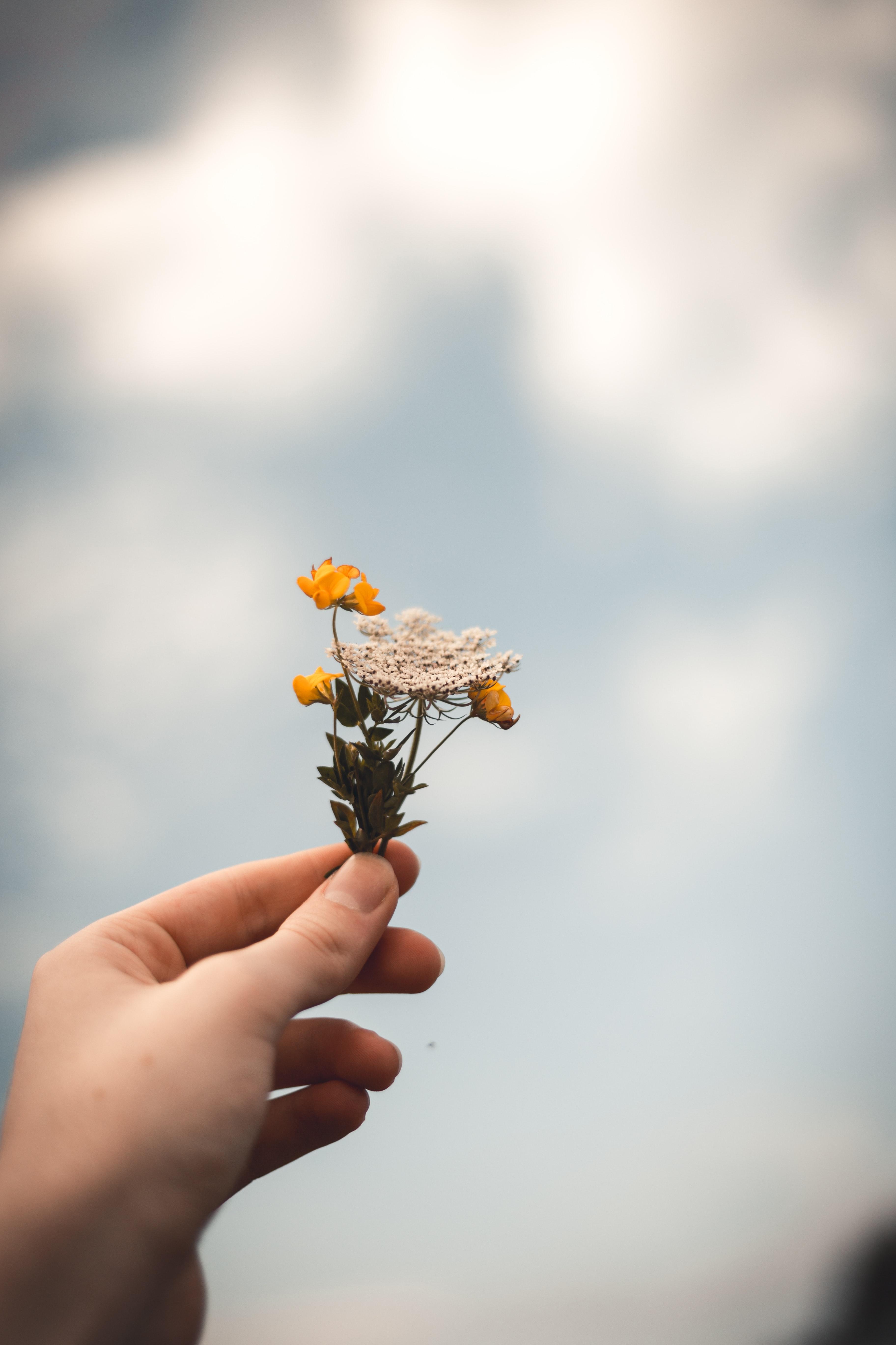 Flower - No image
